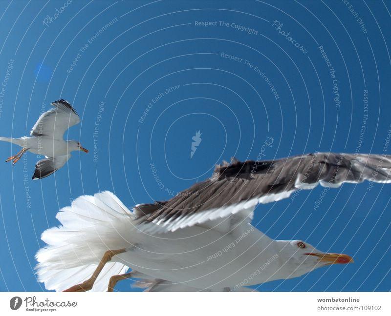 Sky Ocean Beach Bird Coast Aviation Wing Seagull