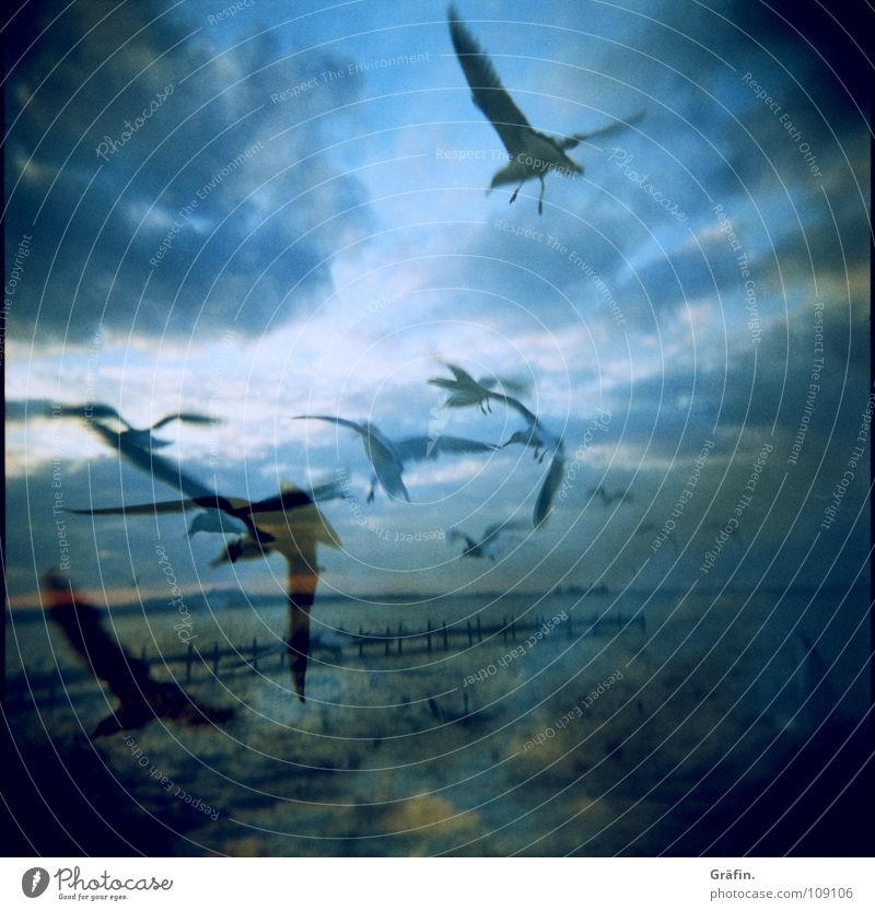 Nature Water Sky Ocean Holga Clouds Lake Bird Waves Coast Flying Horizon Aviation Feather Wing Scream