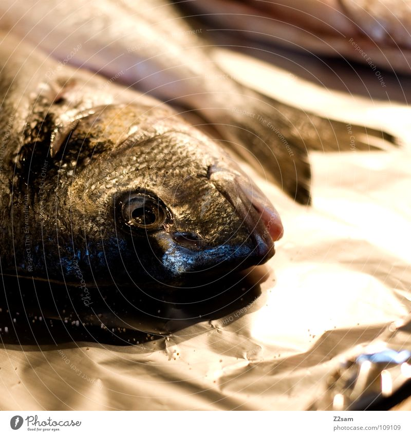 Animal Nutrition Death Mouth Glittering 3 Lie Fish Cooking & Baking Living thing Dinner Barn Lunch Water wings Trout Gill