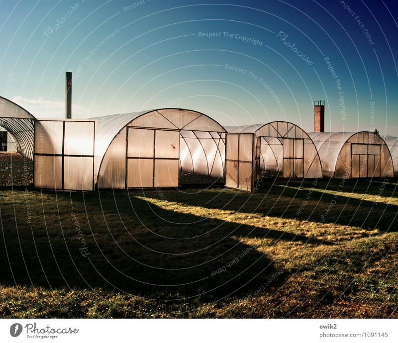 greenhouse effect Agriculture Forestry Trade Company Cloudless sky Beautiful weather Grass House (Residential Structure) Building Greenhouse Market garden
