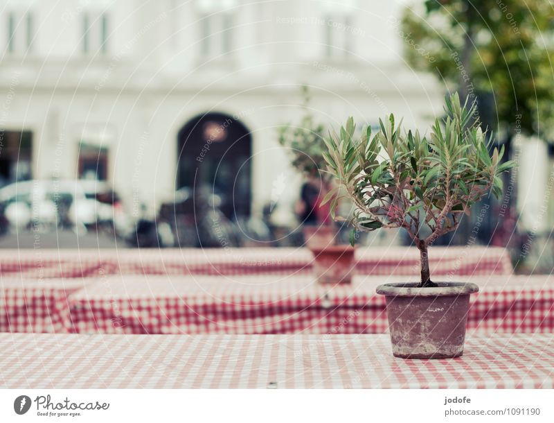 mediterranean feeling Style Trip Hospitality Table Checkered Reddish white White Plant Tree Citrus fruits Beer table Folding table Roadside Death Loneliness