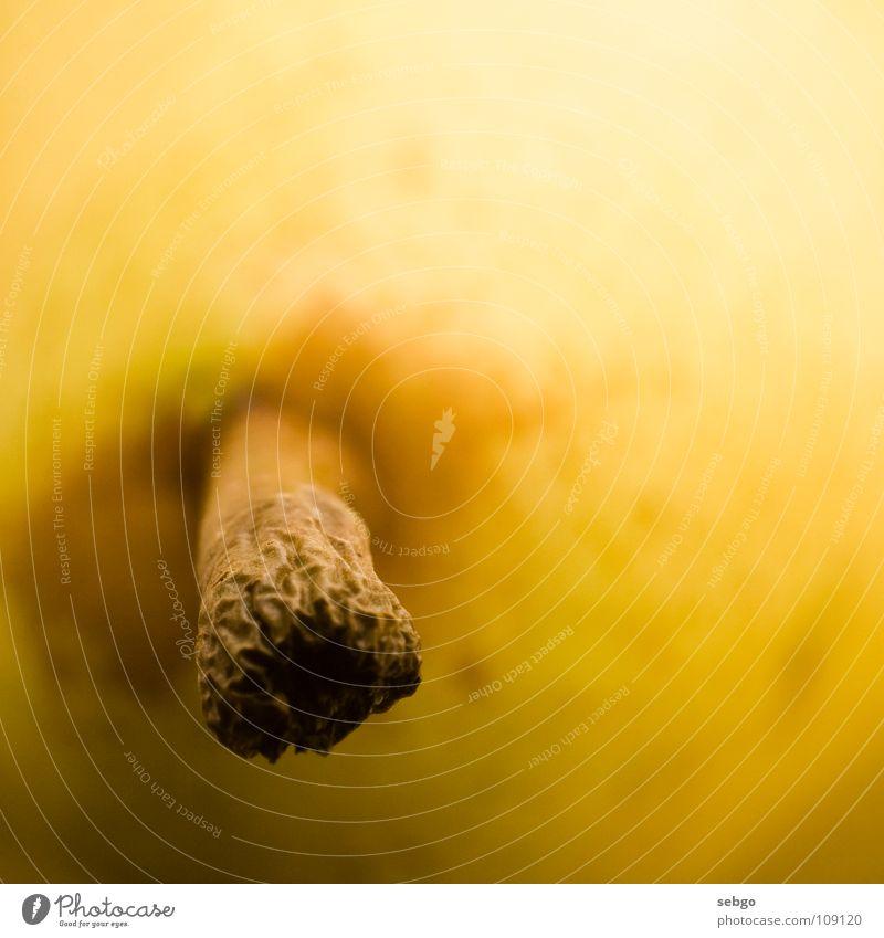 Plant Nutrition Yellow Brown Orange Healthy Food Fruit Stalk Pear