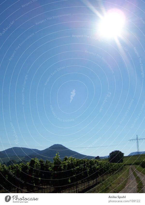 Nature Sun Summer Street Mountain Bright Blue sky Peaceful Vineyard