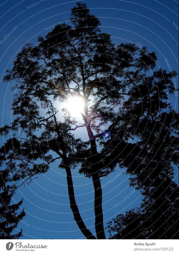 - tree - Tree Summer Force Beautiful Sun Blue Silhouette Nature Sky