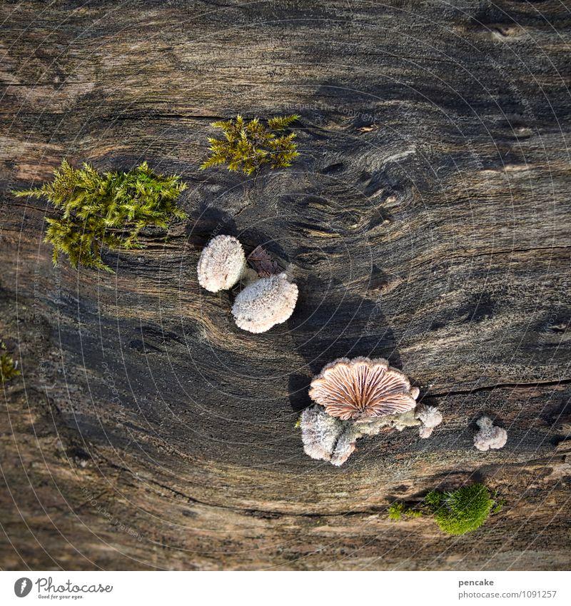 everything on deck! Nature Elements Spring Plant Tree Sign Resolve Life Joie de vivre (Vitality) Survive Surprise Mushroom Tree trunk Moss Wood grain