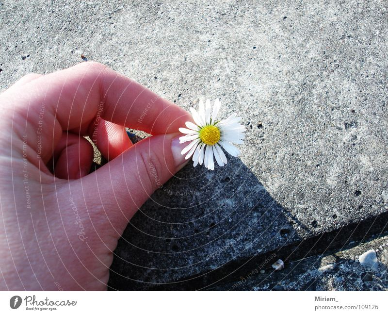 Nature Beautiful Summer Flower Joy Weather Sweet Romance Asphalt Friendliness Wonder Medicinal plant Weed Chamomile