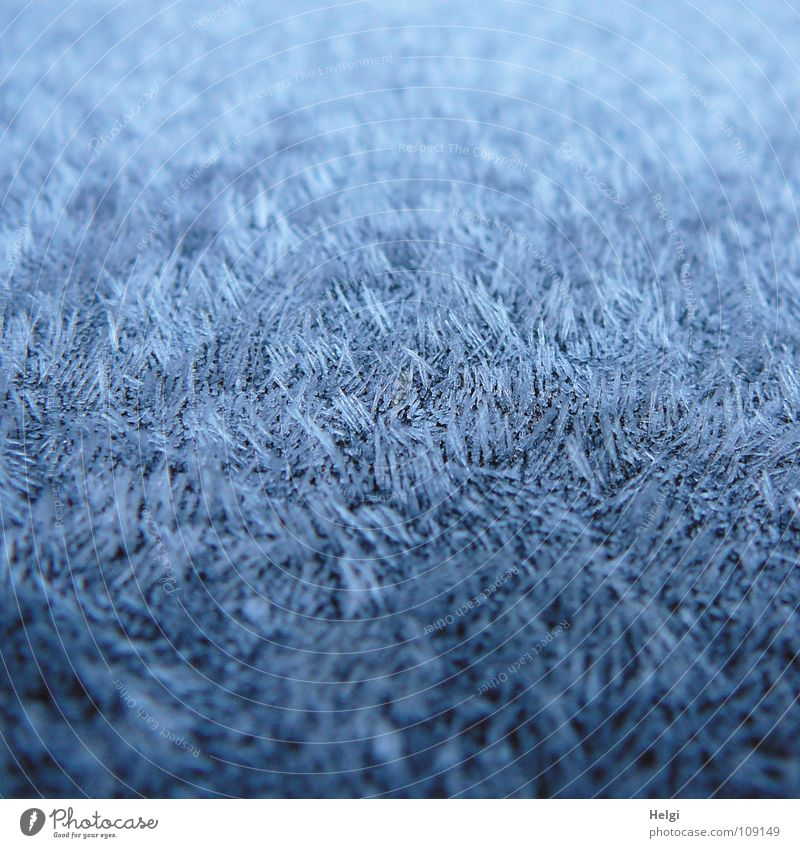 full-coverage hoarfrost with tips Autumn Morning Hoar frost Freeze Frozen Ice crystal Cold Damp White Chopstick Long Thin Vertical Stand Side by side Together