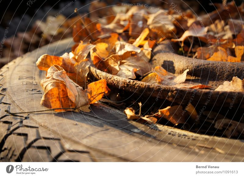 Time to go Autumn Leaf Transport Car Rust Broken Death Stagnating Tire Rubber Goodbye Tire tread Wheel rim Autumn leaves Rachis Trash Dispose of Colour photo
