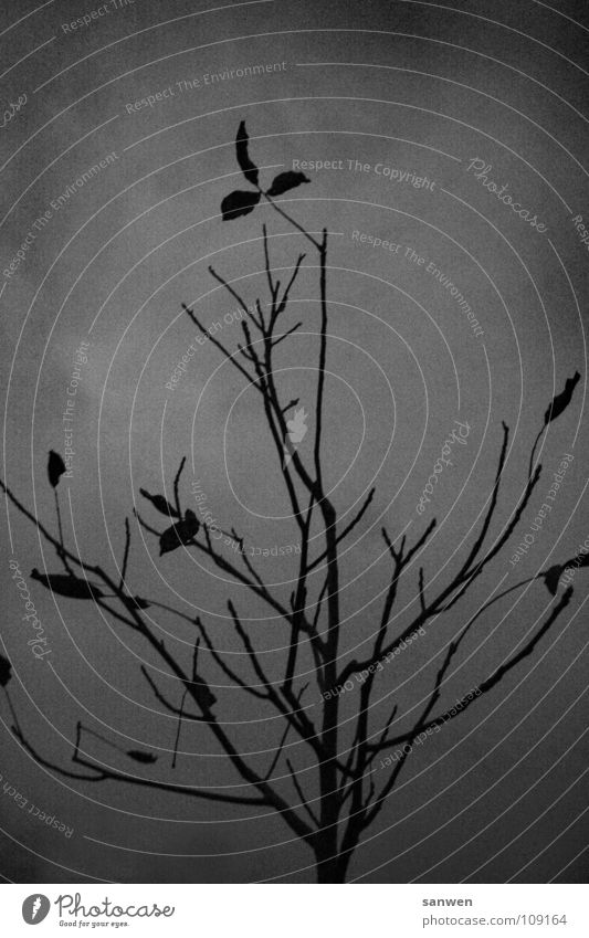 singing, sounding little tree Tree Twilight Bad weather Gray Autumn Leaf Dark Cold Loneliness Grief Black & white photo Evening Clouds Autumnal Branch