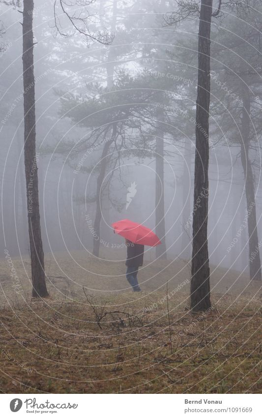 |,| Human being Child Girl Infancy 1 8 - 13 years Environment Nature Plant Emotions Moody Red Umbrella To go for a walk Going Tree trunk Pine Forest Grass Fog
