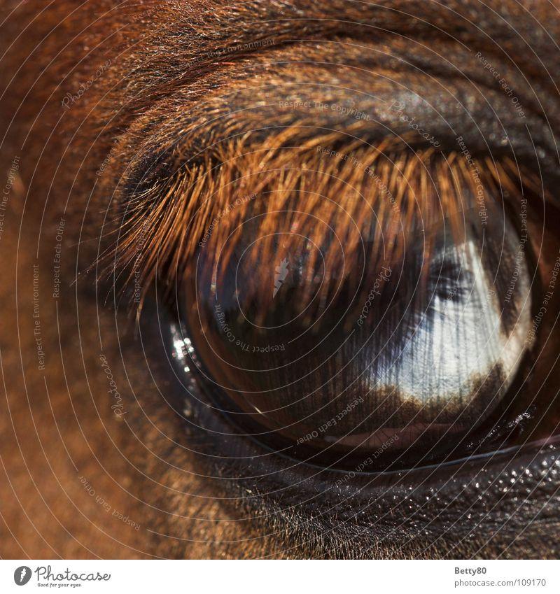 A blink of an eye away... Horse Horse's eyes Eyelash White Looking Discover Macro (Extreme close-up) Close-up Mammal eyelid crease Blue Fisheye Snapshot