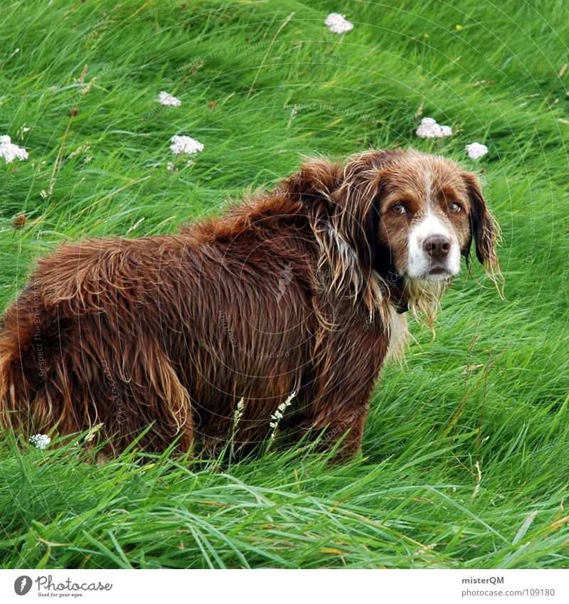 Animal Grass Dog Brown Grief Trust Pelt Distress