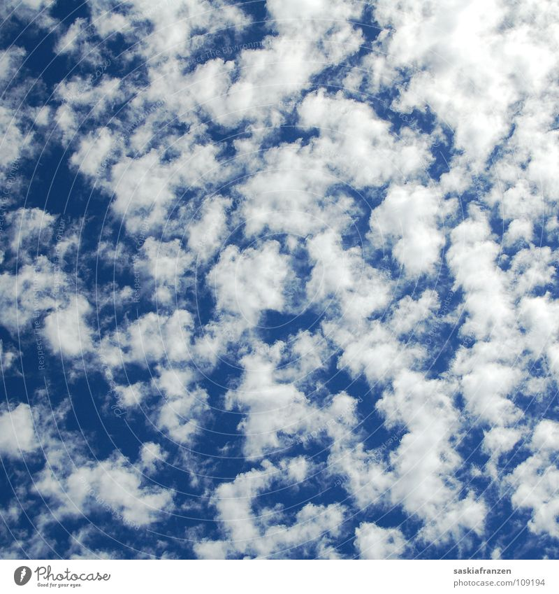 Undecided. White Clouds Distributed Altocumulus floccus Horizon Heavenly Future Thought Summer Physics Roll Autumn Blue Sky Weather Blue sky Far-off places