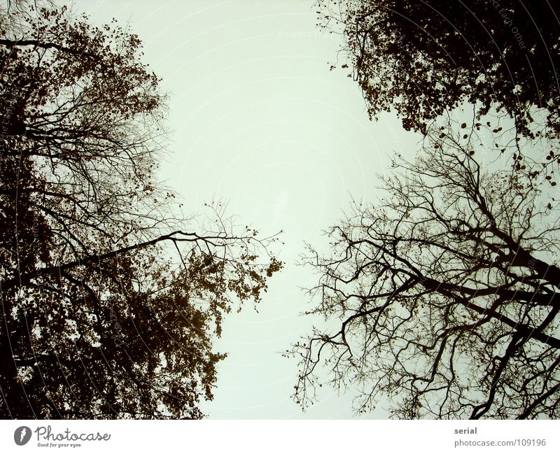 Sky Tree Blue Leaf Black Dark Cold Autumn Above Gray Branch Treetop Bad weather Branched