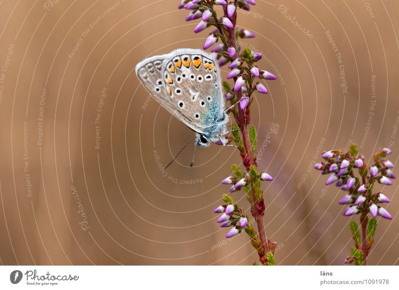 habitat Butterfly Blossom Insect Nature Blossoming Deserted