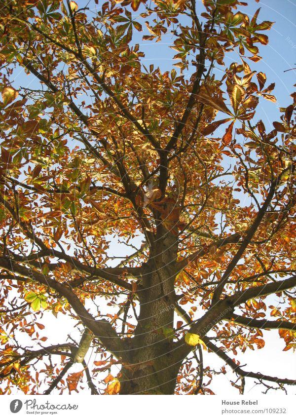 Tree from below Autumn Leaf Wetzlar Seasons Branch Nature