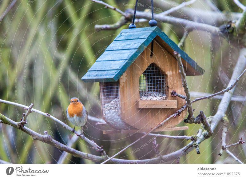 robin Animal Wild animal Bird Robin redbreast 1 Eating Flying Sit Birdhouse Colour photo Exterior shot Deserted Day Portrait photograph Full-length Looking
