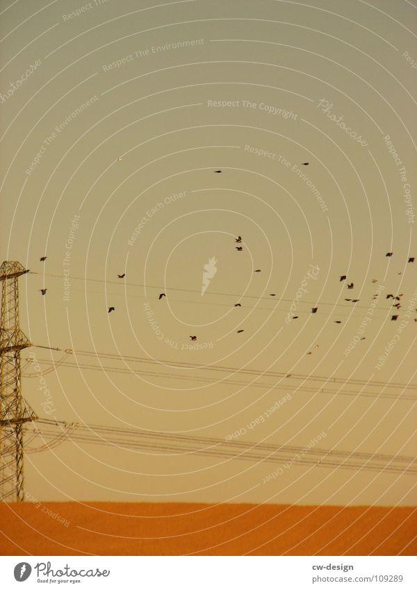 Flies my monkeys, flies! Bird Flock of birds Migratory bird Electricity pylon Physics Pleasant Field To go for a walk Commuter Air Breathe Masculine Where