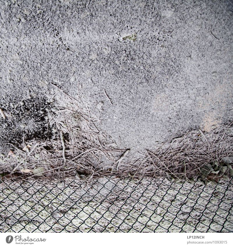 Nature White Winter Snow Lanes & trails Gray Background picture Snowfall Perspective Branch Ground Protection Fence Barrier Protest Wire netting fence