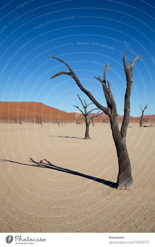 Sky Nature Vacation & Travel Summer Sun Tree Landscape Far-off places Environment Death Freedom Line Sand Weather Earth Tourism