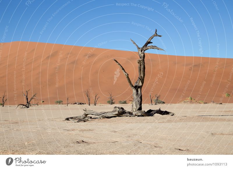 Sky Nature Vacation & Travel Summer Tree Landscape Far-off places Environment Death Freedom Sand Weather Growth Earth Tourism Climate