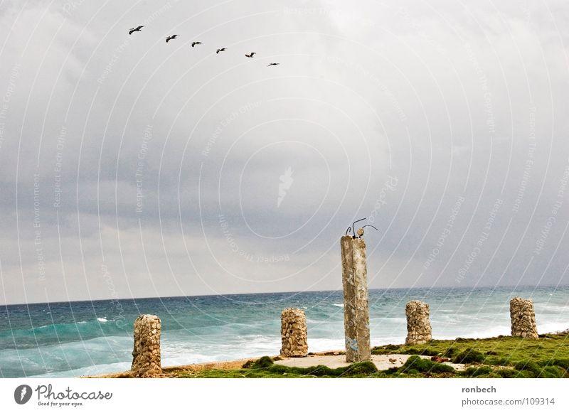 Windstorm on the horizon Ocean Clouds Storm Bird Beach Waves Broken Destruction Gloomy Loneliness Gale Gray Ruin Autumn Sky Rain Weather Flying