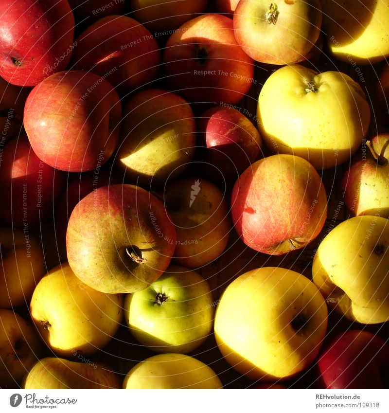 apples Autumn Multiple Heap Red Yellow Feed Tree Apple tree Thanksgiving Sin Sweet Delicious Fruit Healthy Shadow Many a lot rosy-cheeked Nutrition Windfall