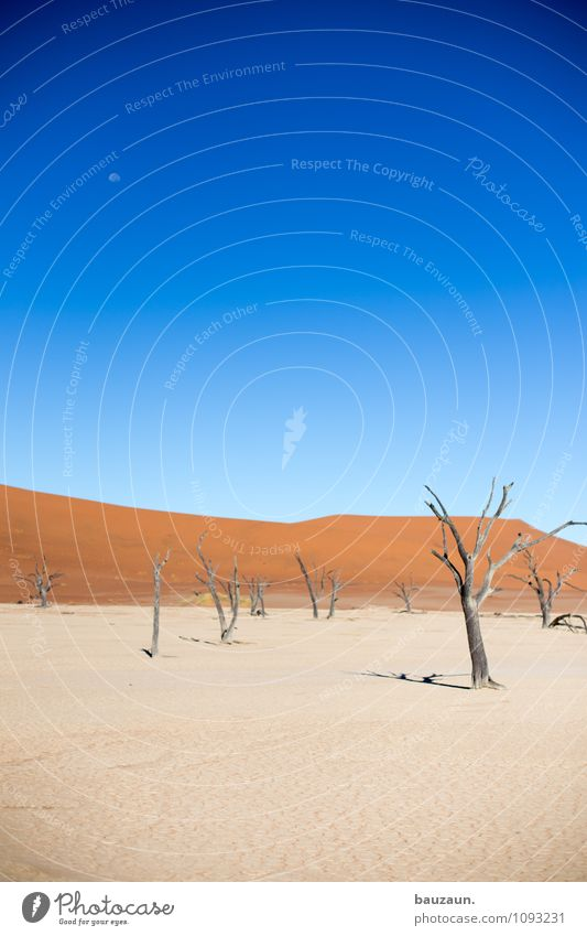 dead vlei. Vacation & Travel Tourism Adventure Far-off places Freedom Summer Environment Nature Landscape Sky Cloudless sky Moon Climate Weather