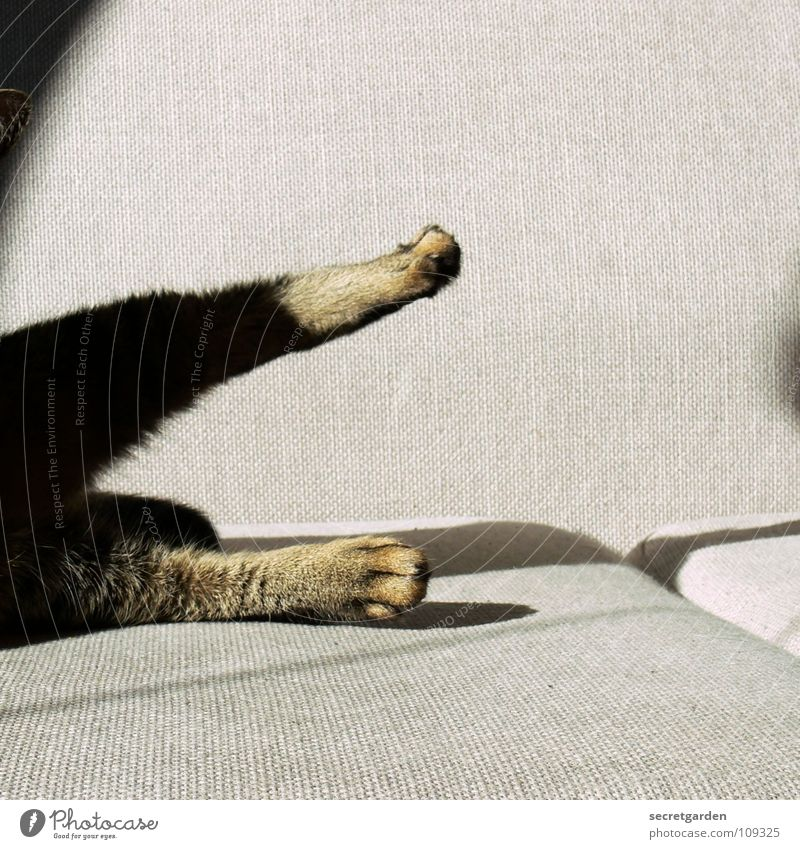 Cat gymnastics Sofa Animal Claw Cat's paw Paw Relaxation Cleaning Lick Outstretched Hang Striped Cloth Physics Cuddly Gray Cozy Slouch Television Material