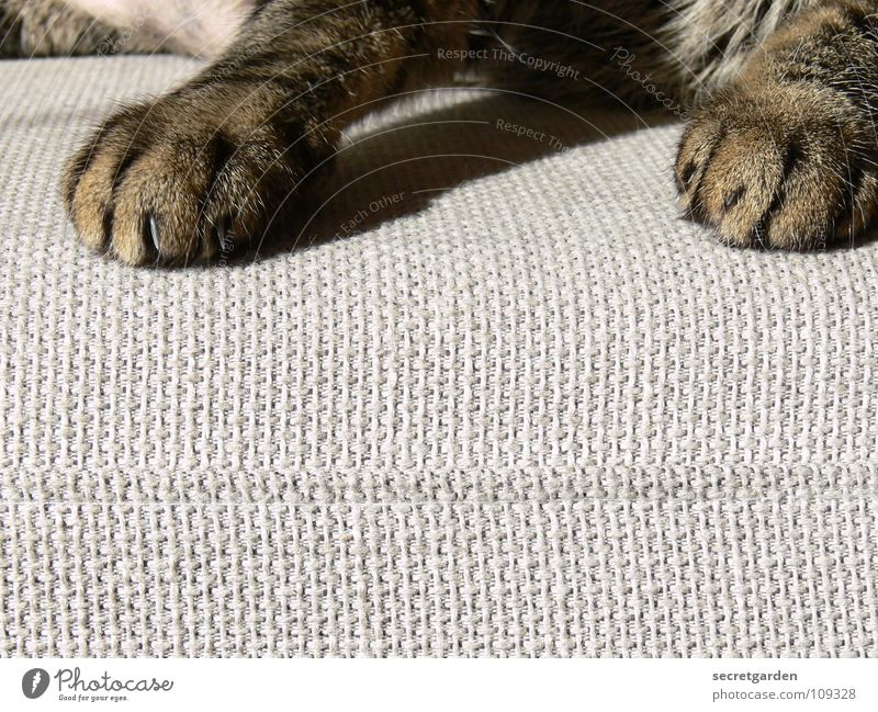 another paw manicure? Sofa Cat Animal Claw Cat's paw Paw Relaxation Outstretched Hang Striped Cloth Physics Cuddly Gray Cozy Slouch Television Material