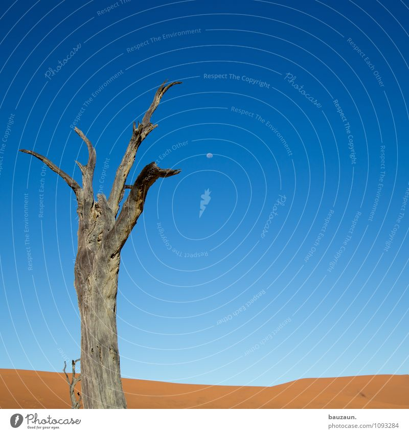 dead vlei². Vacation & Travel Tourism Adventure Far-off places Freedom Summer Environment Nature Landscape Earth Sand Sky Cloudless sky Moon Climate