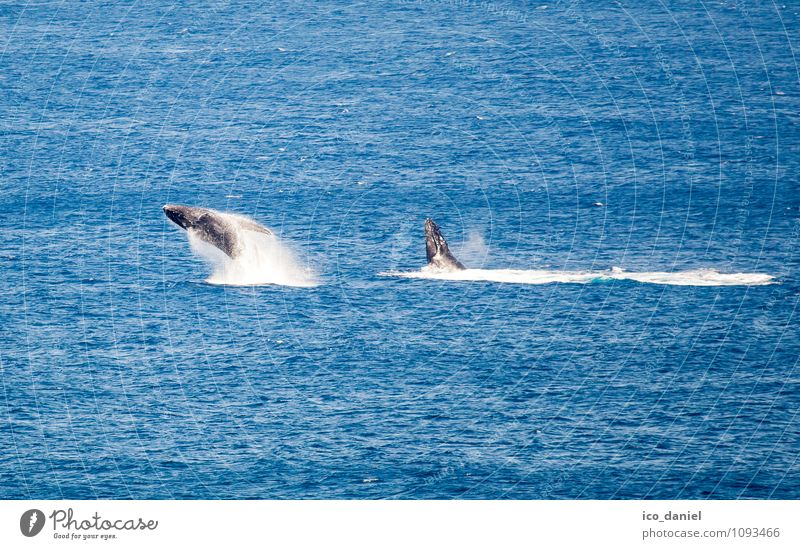 Nature Vacation & Travel Beautiful Water Ocean Joy Animal Far-off places Coast Freedom Jump Leisure and hobbies Wild animal Tourism Waves Pair of animals