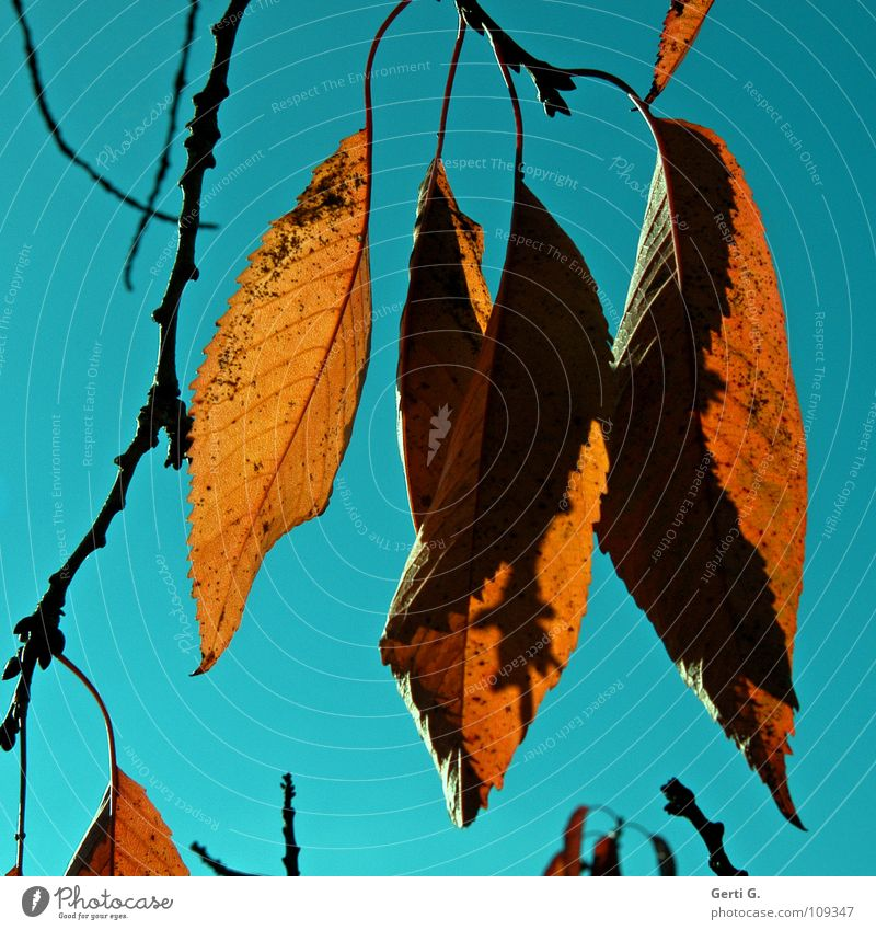 Sky Tree Blue Leaf Colour Lamp Autumn Warmth Brown Orange Physics Transience Beautiful weather Autumn leaves Sky blue