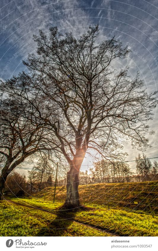 Tree in backlight Nature Landscape Plant Sky Clouds Sun Sunlight Winter Beautiful weather Contentment Attentive Caution Serene Calm HDR Reflection