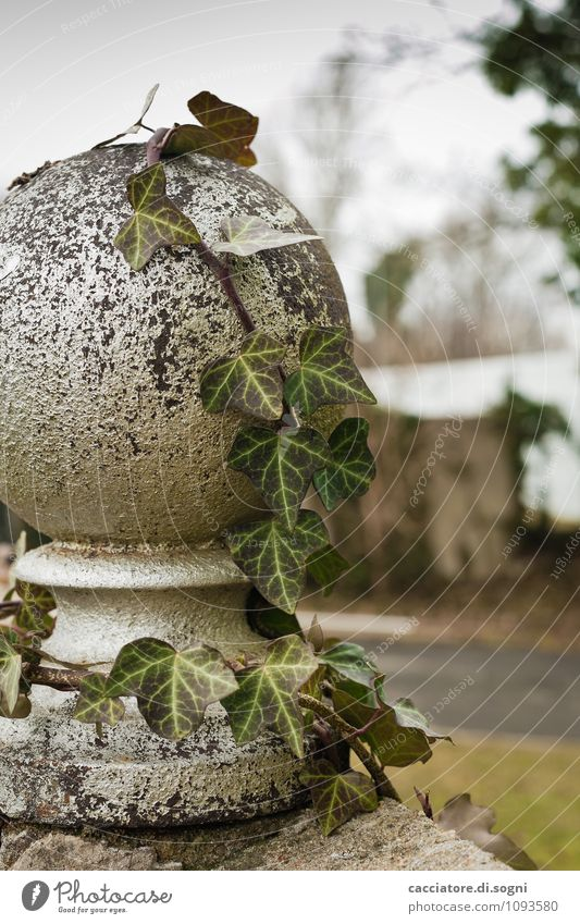 ivy Environment Autumn Winter Plant Ivy Foliage plant Wild plant Park Wall (barrier) Wall (building) Sphere Growth Dark Simple Natural Gloomy Gray Green Modest