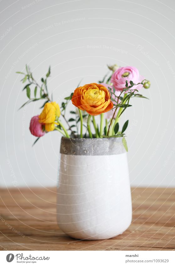 SPRING MESSENGERS Nature Plant Spring Flower Bushes Leaf Blossom Moody Decoration Bouquet Buttercup Vase Spring colours Spring fever Beautiful Colour photo
