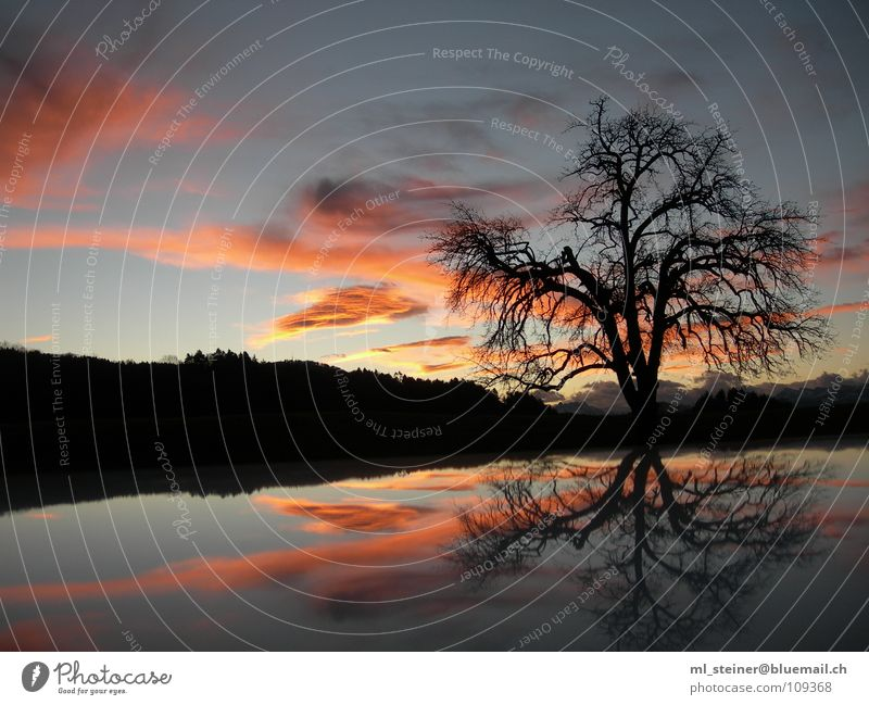 Sky Tree Clouds Lake Landscape Water reflection