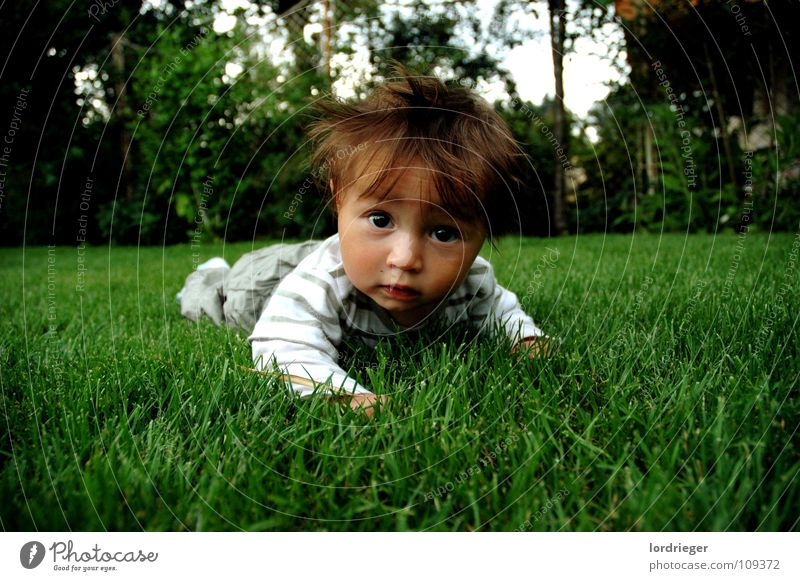sandro elias rieger Child Toddler Meadow Green Brown Animal Concern Peace Face Eyes Mouth Ear wise Nature Garden Hair and hairstyles in charge Parenting