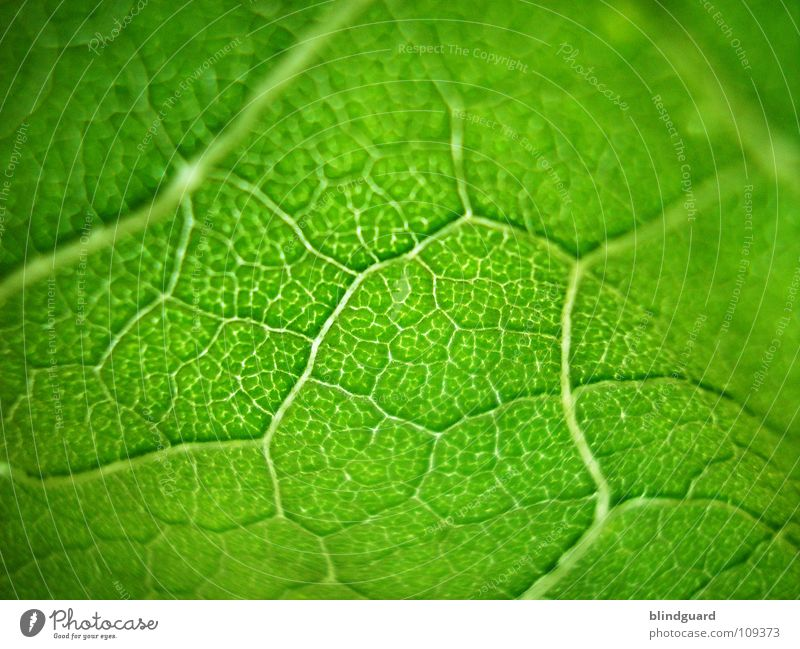 bright green ;o) Leaf Physics Fine Branchage Sunflower Green Plant Biology Fresh Grass green Juicy Gardener Summer Perspective Tendril Flourish Growth Occur