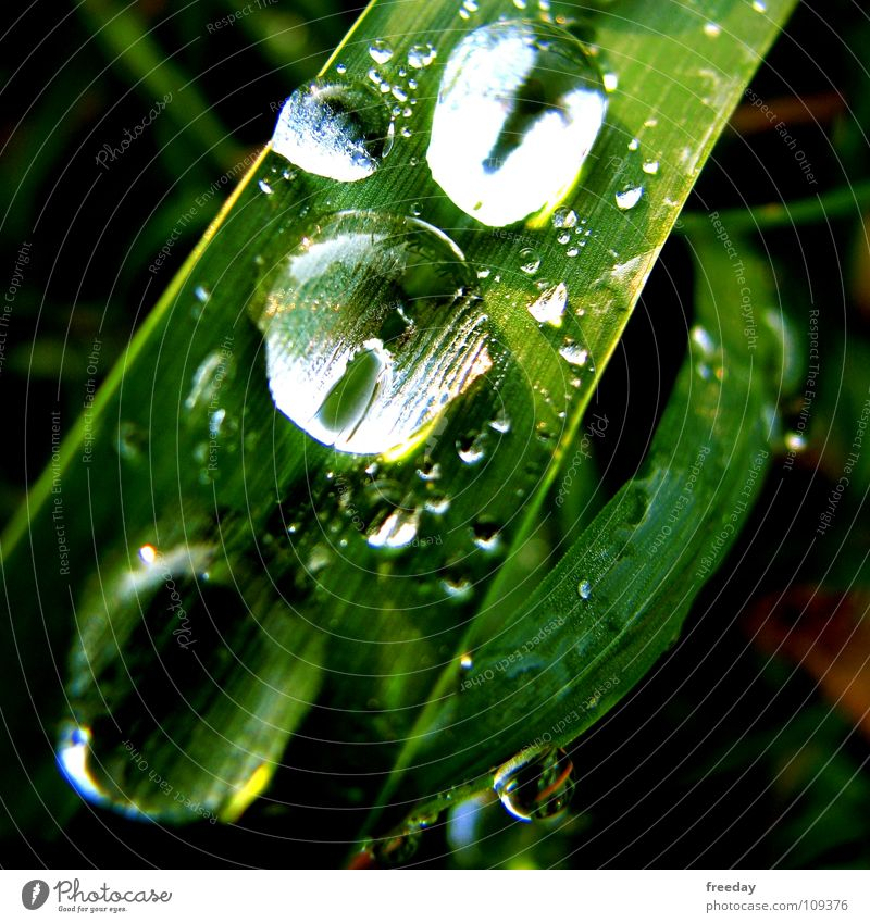 Nature Plant Green Summer Water Leaf Environment Life Grass Background picture Rain Power Crazy Drops of water Wet Round