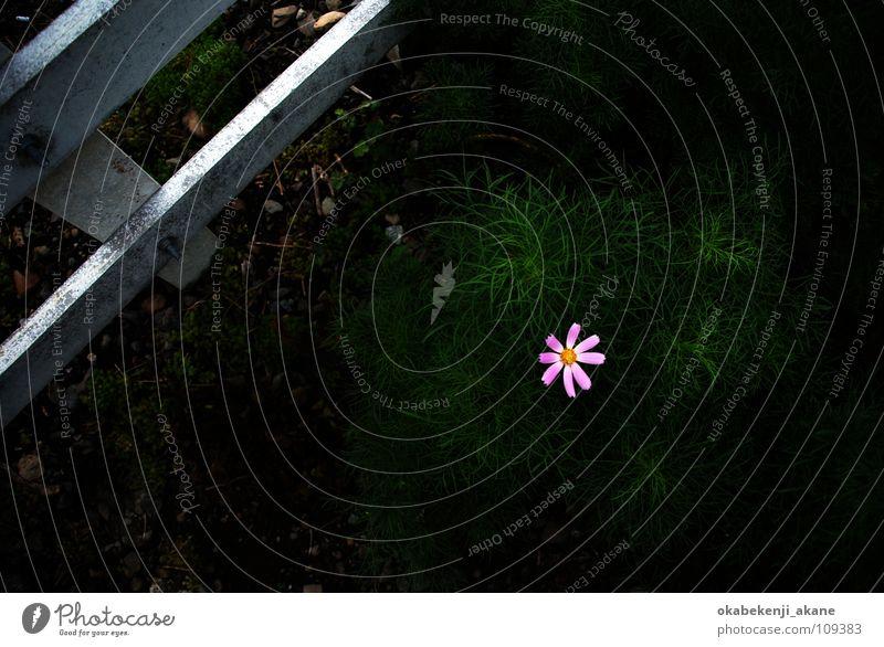 a ray of hope Pink dark black flower light atmosphere Air