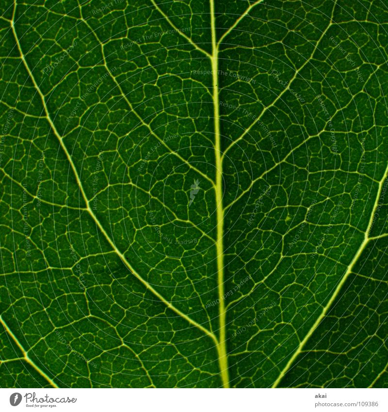 The sheet 23 Plant Virgin forest South America Wilderness Green Botany Part of the plant Creeper Verdant Environment Bushes Warped Greenhouse Summer Sky blue