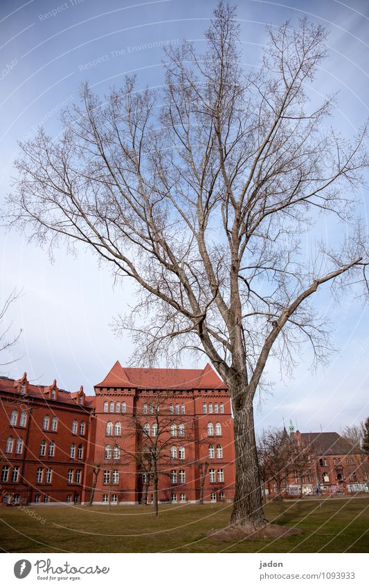 Sky City Old Plant Tree Red House (Residential Structure) Wall (building) Architecture Meadow Spring Style Building Wall (barrier) Garden School