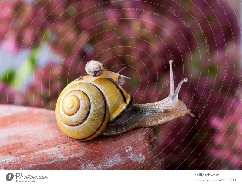 banded snail Body House (Residential Structure) Garden Animal Crawl Exceptional Large Small Near Slimy Safety (feeling of) Help Trust Attachment Crumpet snails