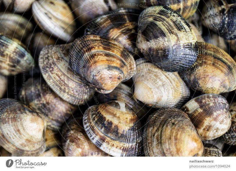 seashells Food Seafood Nutrition Lunch Dinner Organic produce Vegetarian diet Diet Slow food Finger food Animal Mussel Fresh Delicious Natural Wild Brown