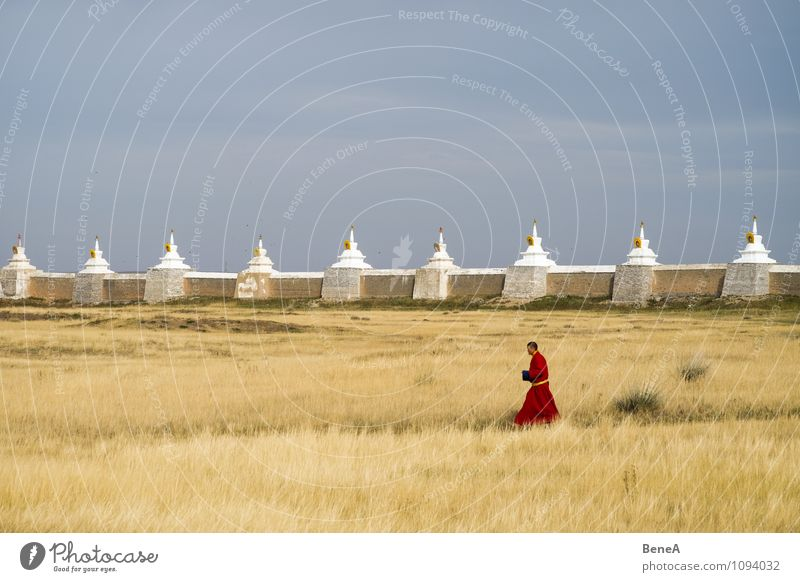 monk Calm Meditation Monk Human being Masculine Man Adults 1 Religion and faith Buddhism Temple Grass Park Meadow Church Wall (barrier) Wall (building)
