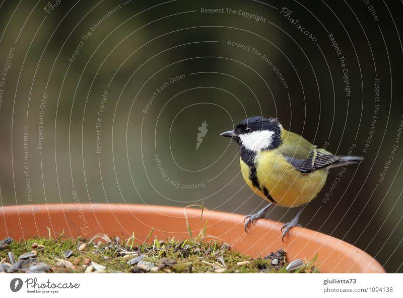 Nature Beautiful Animal Black Yellow Spring Happy Small Garden Bird Wild animal Sit Wait Observe Cute Curiosity