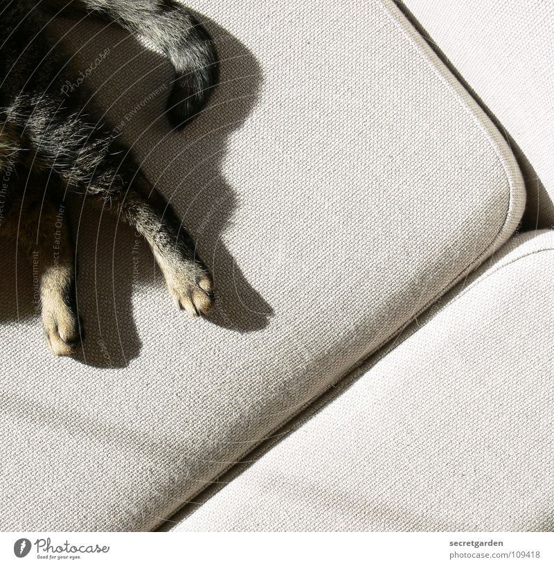 free corner on the sofa Sofa Cat Animal Claw Cat's paw Paw Tails Relaxation Outstretched Hang Striped Cloth Physics Cuddly Gray Cozy Slouch Television Material