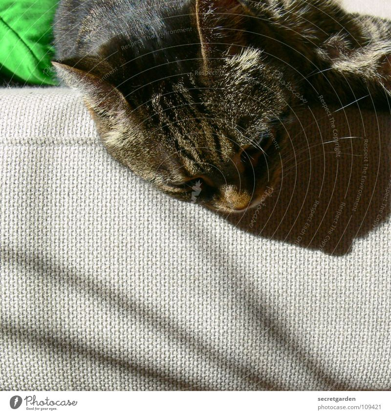small sag II Sofa Cat Animal Relaxation Outstretched Hang Striped Cloth Physics Cuddly Gray Cozy Slouch Television Material Living room Furniture Calm Doze