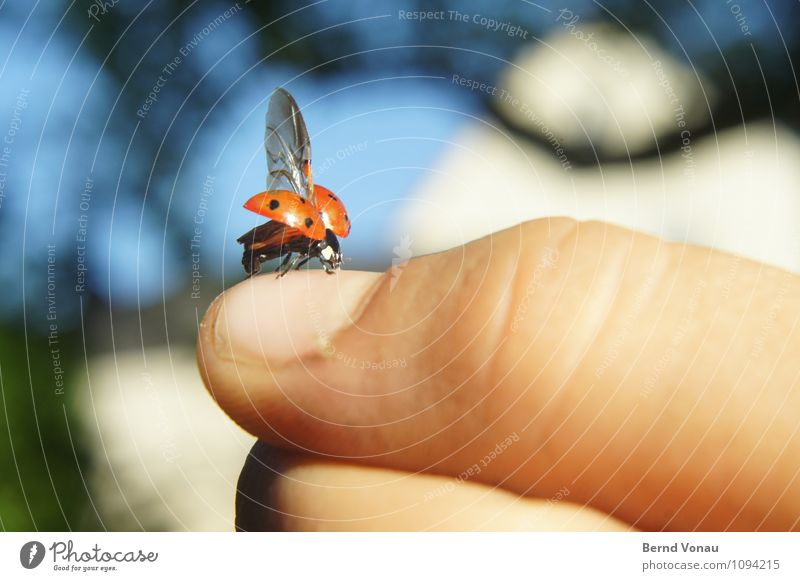 air thumbnail Child Hand Red Warmth Garden Infancy Sit Skin Wing Beginning Cute Point Insect Departure Blue sky Thumb